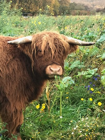 Isle Of Skye. Best Of Skye Full Tour. A Small Group Tour.: Hairy Coo