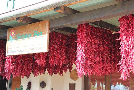 Satriano di Lucania, Italy: Peperoni in essiccazione.