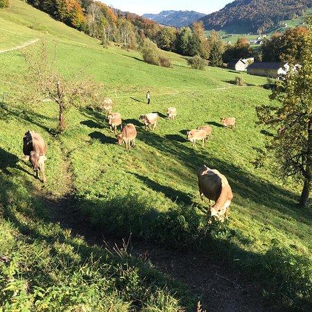 Hittisau, Austria: photo6.jpg