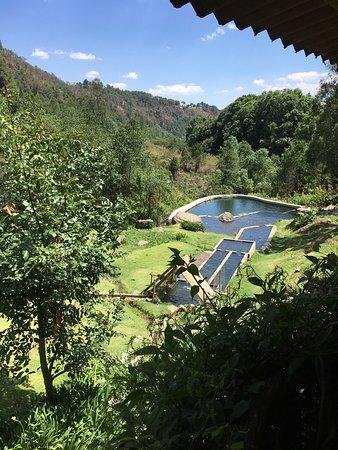 Morelos, Mexico: Vista del bosque y el estanque.