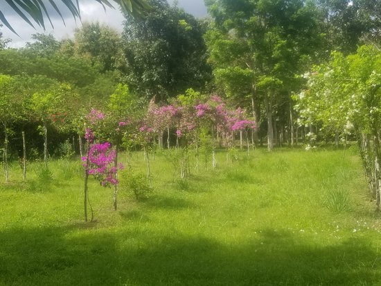 Belize Spice Farm & Botanical Garden 사진