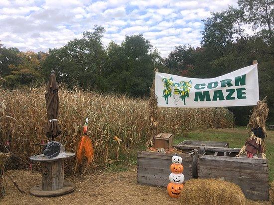 Congers, NY: Dr. Davies Farm Corn Maze