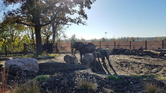 Henry Doorly Zoo: 20181027_101401_001_large.jpg