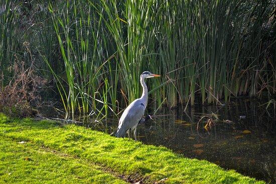 A bird in Vondelpark