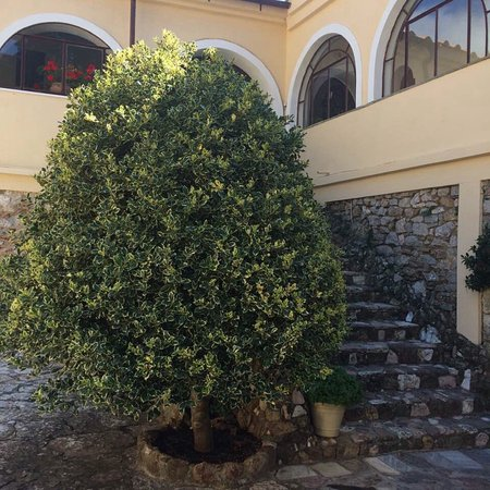 Villia, Grecja: Μονή Οσίου Μελετίου Οινόης.
