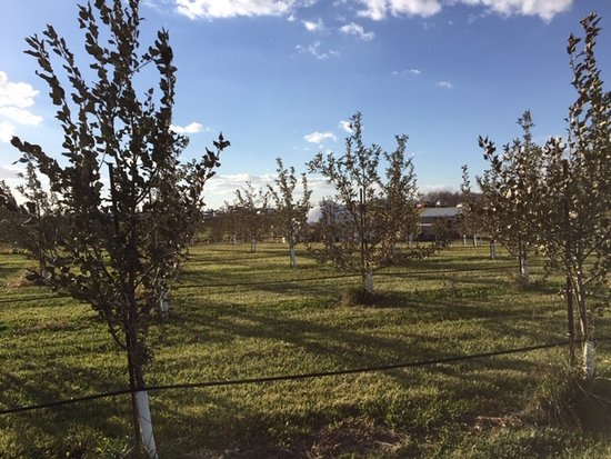 Country Blossom Farm: acres of beautifully groomed orchards
