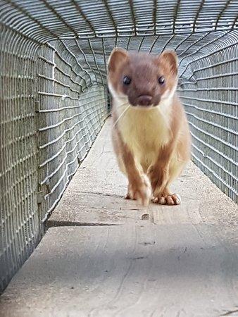 British Wildlife Centre: 20181024_164053_large.jpg