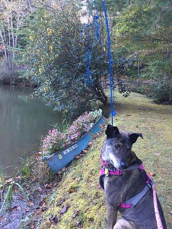 Gerton, Северная Каролина: Pond Area