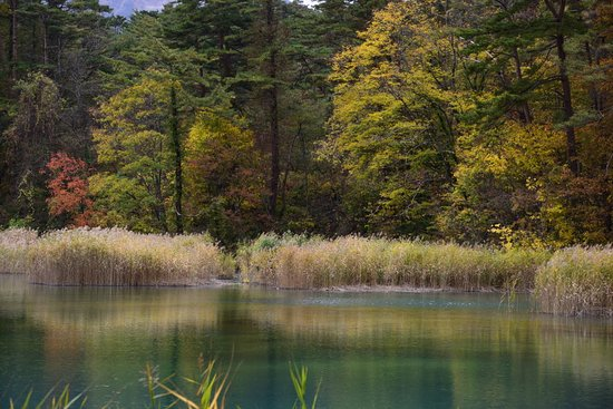 Rurinuma Swamp