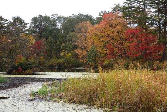 Rengenuma Swamp
