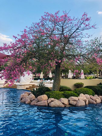 Beautiful pink trees throughout the pools.
