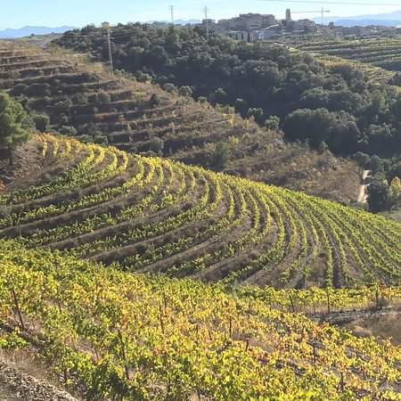 Legendarisk vingård