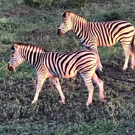Mkuze Game Reserve, แอฟริกาใต้: photo1.jpg