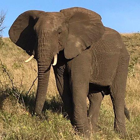 Mkuze Game Reserve, แอฟริกาใต้: photo2.jpg