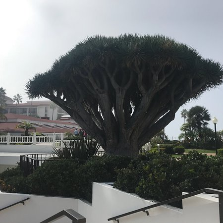 Photo Sharing some of My Photo's I took of the Wonderful Del Coronado Hotel....
