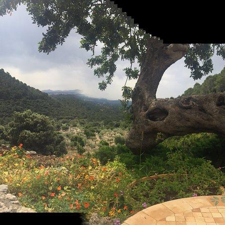 Binibona, Spain: photo3.jpg