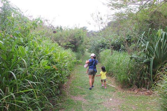 Sigatoka Sand Dunes National Park: Forest walk.