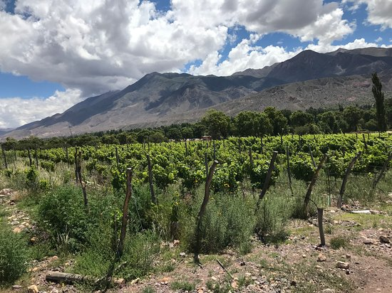 Vinas del Perchel