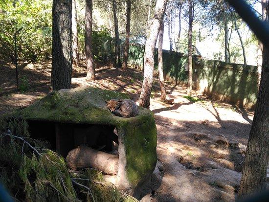 Zoo Guadalajara: Zorros