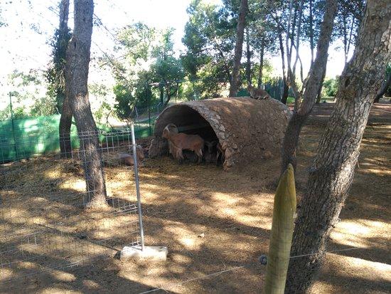Zoo Guadalajara: Arrui