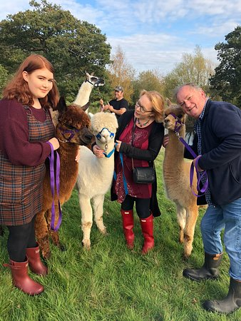 Middle England Farm Alpacas Photo