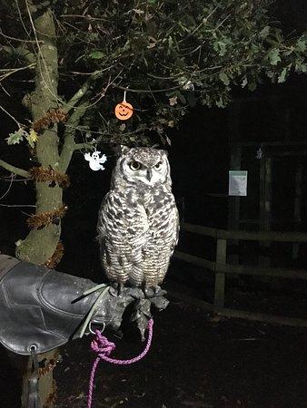 Knockholt, UK: Owls by Moonlight 25/10/18