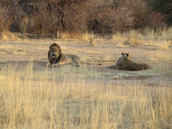 Erindi Game Reserve, Namibia: Not bovvered!