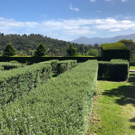 Hedgend Maze Healesville 2019 All You Need To Know