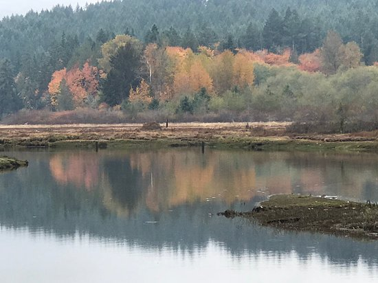 Belfair, Etat de Washington : autumn colors paint the backdrop