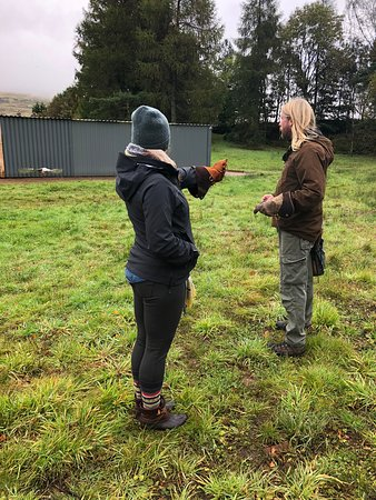 Strathblane, UK: Getting ready for a falcon to come land on my arm. So fun!
