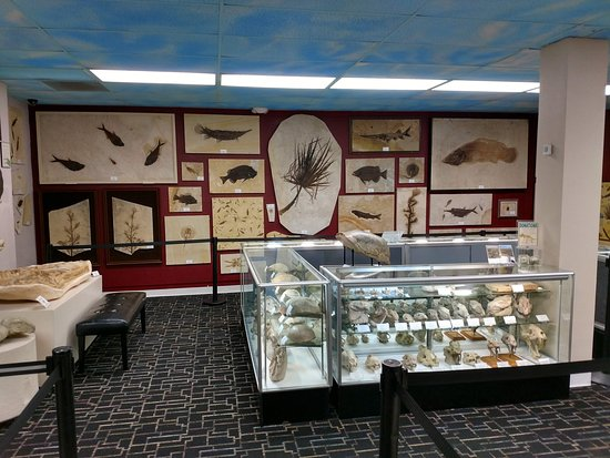 Roynon Museum of Earth Science and Paleontology