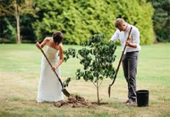Bellenden Ker, Australia: We offer tree planting for weddings and renewal of vow ceremonies as part of our eco experience