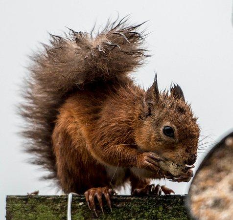 Kippford, UK: wildlife in the park