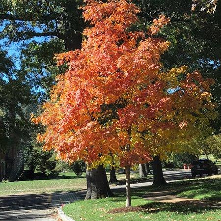Washington University in St  Louis (Saint Louis) - 2019 All You Need