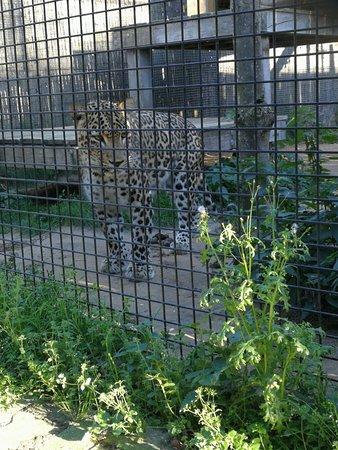 Anders dan andere dierentuinen