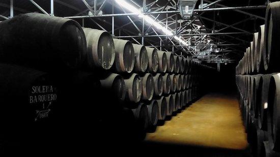 Tour y degustación de aceite de oliva al mediodía de Córdoba: Oak barrels a plenty!