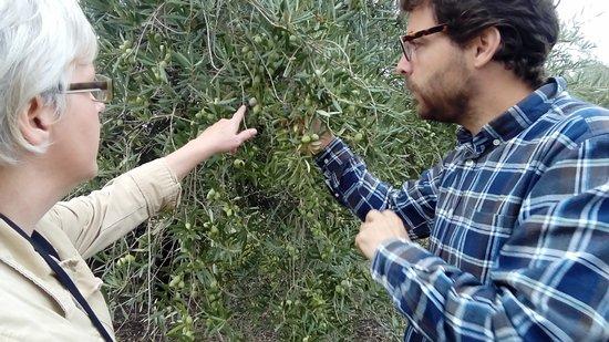 Tour y degustación de aceite de oliva al mediodía de Córdoba: Soaking up the olive growing details.