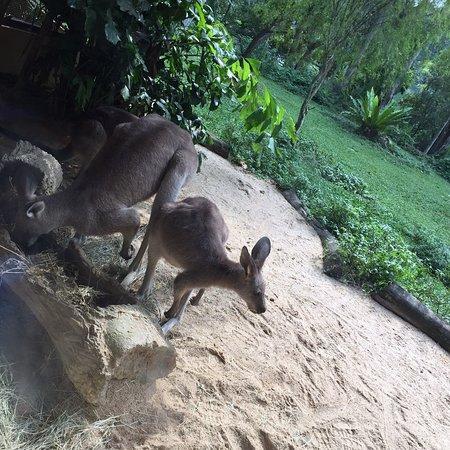 A zoo for kids & grown ups alike