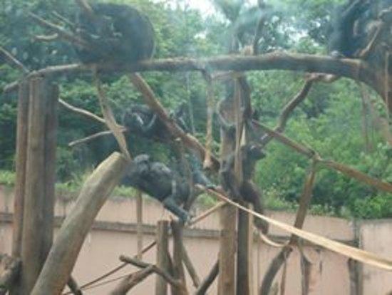 Zoológico de São Paulo: Macaquinhos no zoo!!