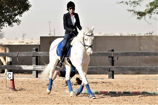 Jebel Ali, Émirats arabes unis : School horse Spotty in his second dressage test