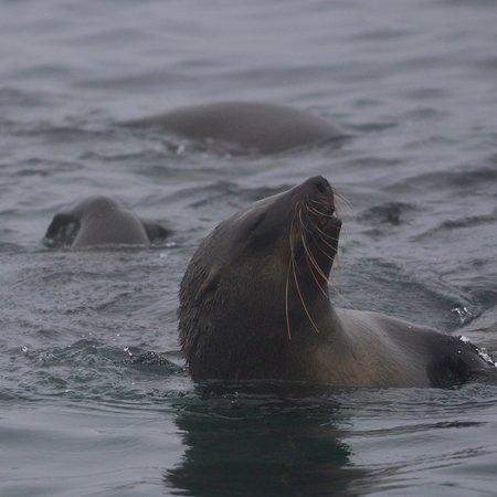 Marine Big 5 Safari de Hermanus