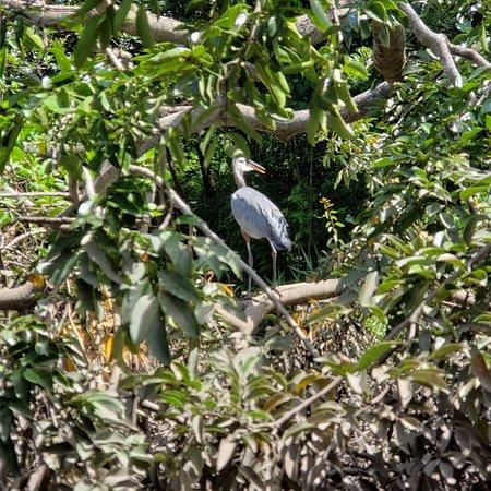 palo verde national park province of guanacaste 2019 all you