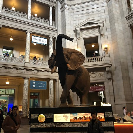 Valokuva: Smithsonian National Museum of Natural History