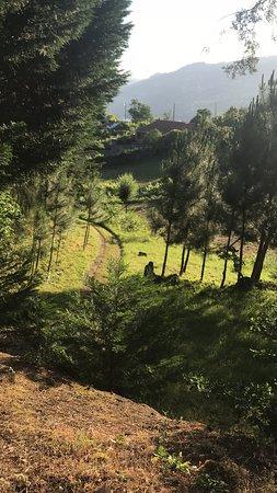 Ancede e Ribadouro, Portugal: Vinhas