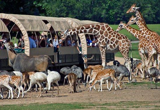 Matadi Africa And Travel Tours