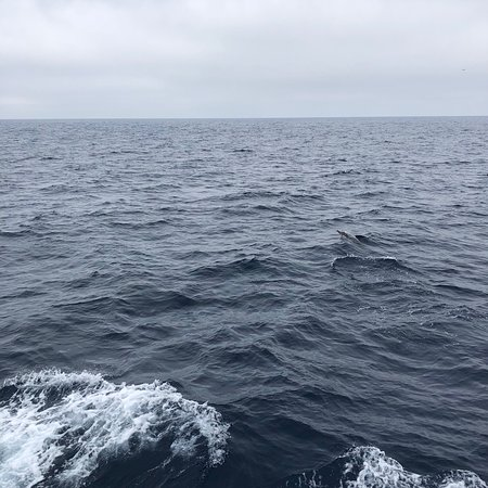 San Diego Whale Watch 2019 All You Need To Know Before You Go