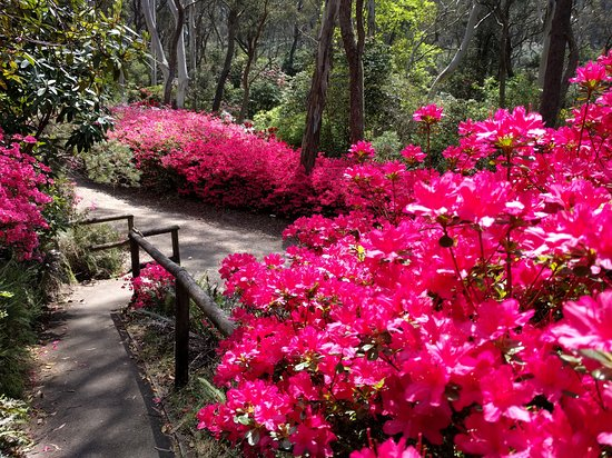 The Campbell Rhododendron Gardens Photo