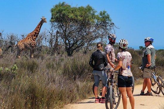 Safari Bike Tour desde Ciudad del Cabo