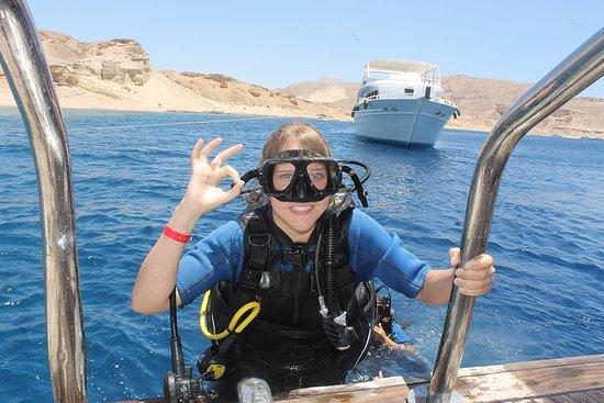 PADI Scuba Diver kursus i Sharm el...