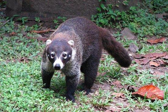 巴拿马城大都会自然公园之旅
